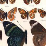 Episode 123: Chopin Gets the Butterflies